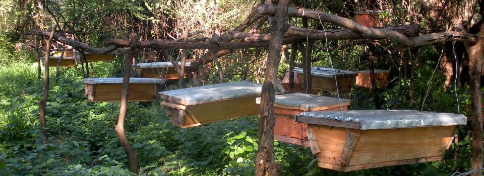 Bees Abroad | Relieving poverty through beekeeping