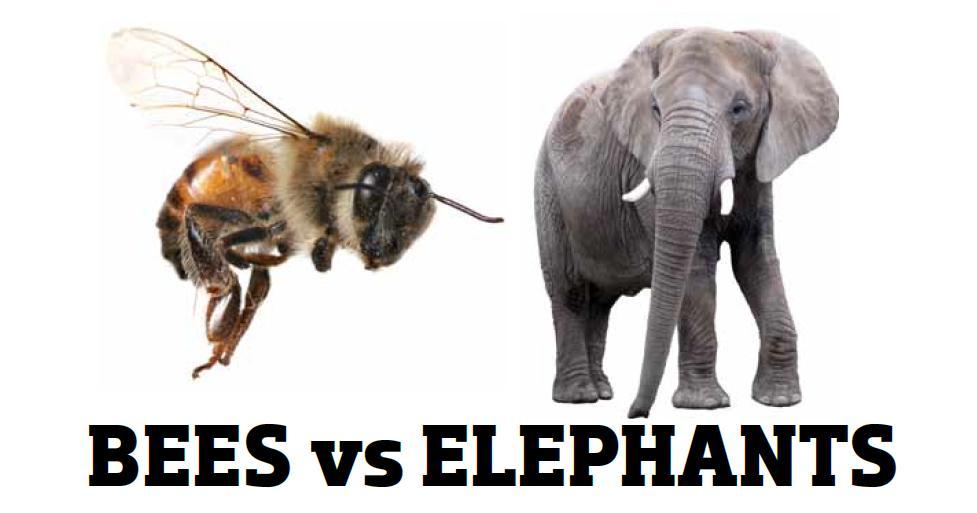 Bees v Elephants