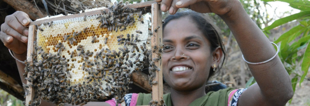 Good to the last drop – Bees in India