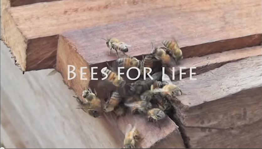 Successful Beekeeping in Ghana