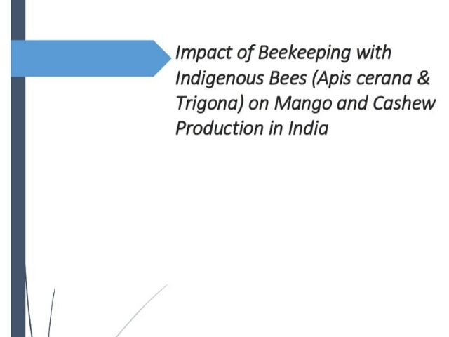 Impact of Beekeeping with Indigenous Bees
